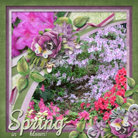 Spring in bloom! (ADS)