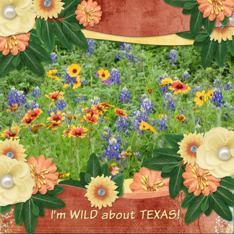 I'm WILD about TEXAS!  (dfdd)