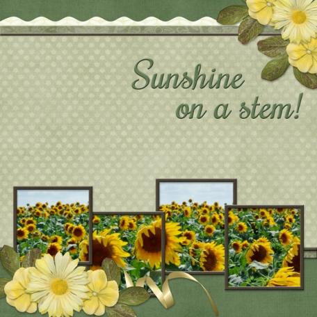 Sunshine on a stem!  (Sher)