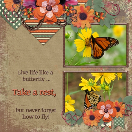 Live life like a butterfly ... (WD)