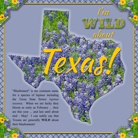I'm WILD about Texas!