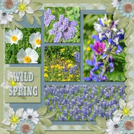 WILD SPRING (WD)