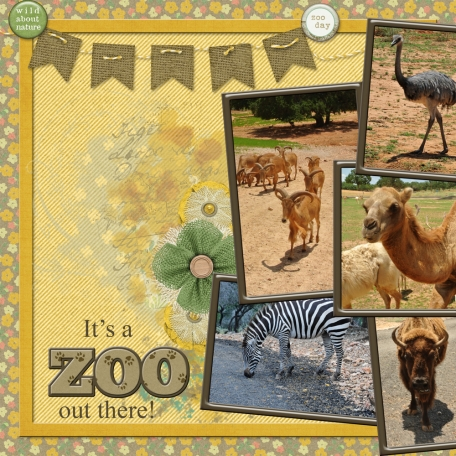 It's a ZOO out there! (JDunn)