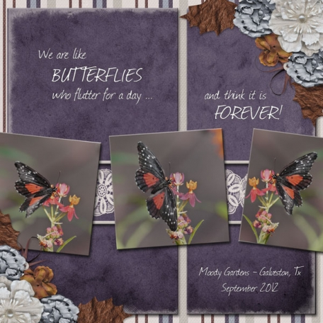 We are like butterflies ... (wd)