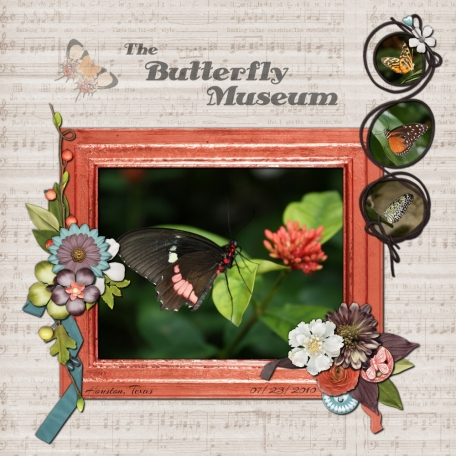 The Butterfly Museum