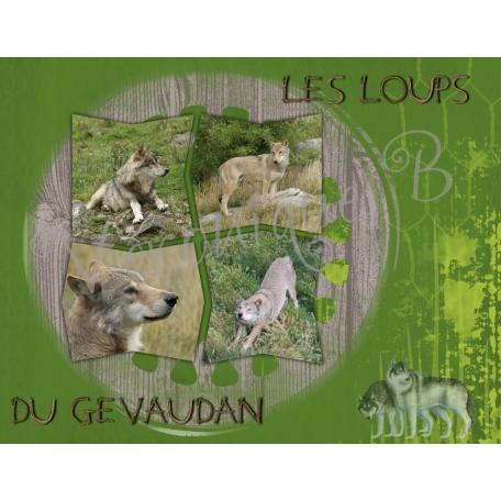 wolf in Gevaudan (France)