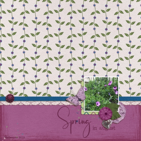 Spring in august (Lilac dreams)