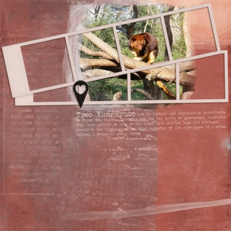 Tree Kangaroos (Travelogue)