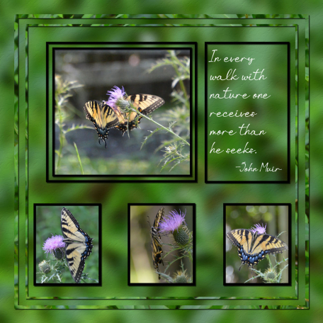 Butterflies on the Upper Forty