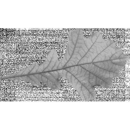 Leaf Template 005