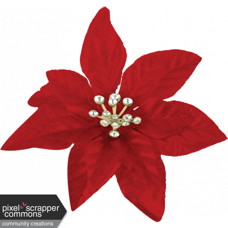It's Christmas Red Flower