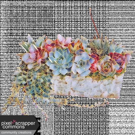 Basket of Succulents