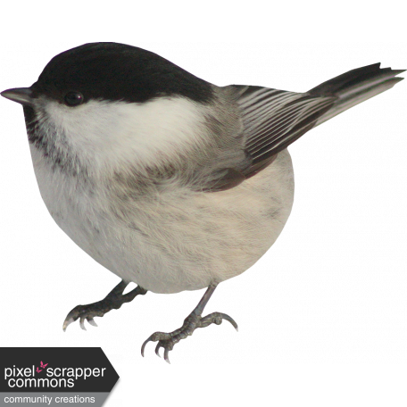 Christmas Wishes - Bird