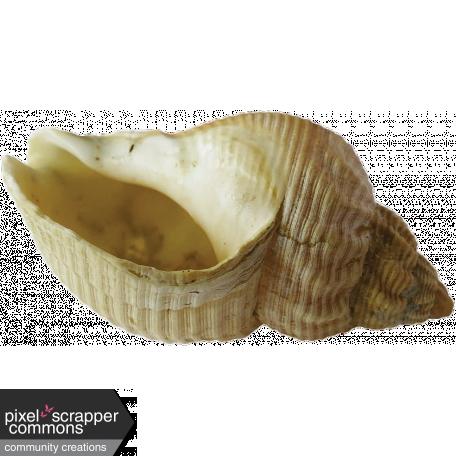 Down Where It's Wetter - Seashell #1
