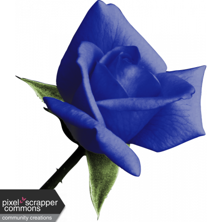 Kitty Love Element - Blue Bud Rose