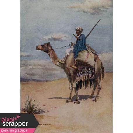 Egypt Illustration - Camel