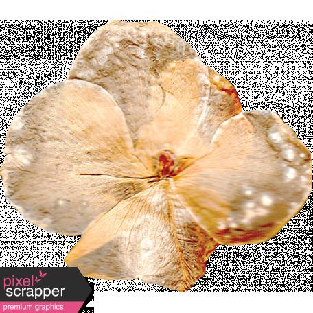 Pressed Flower 01