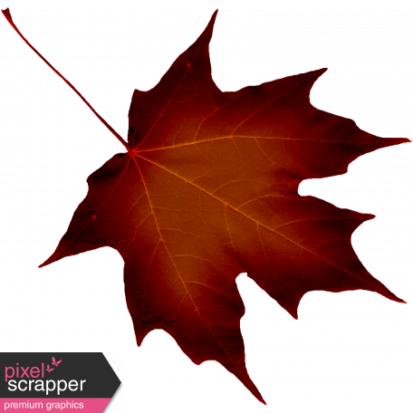 Crisp Fall Air Leaf 06