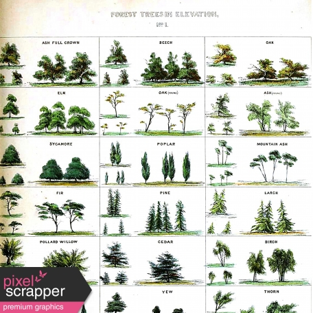 Woodsman Paper 843 - Vintage