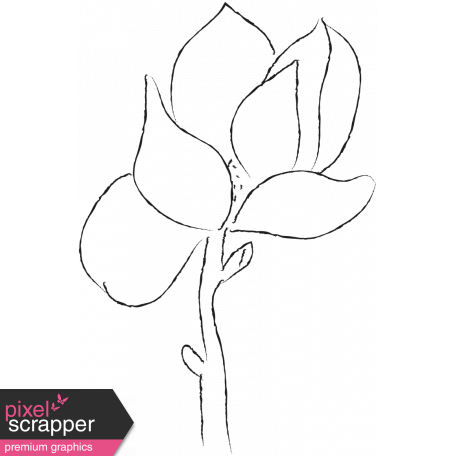 Drawn Flowers - Templates - Sketch Magnolia