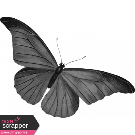 Butterfly Template 050 Graphic By Janet Scott