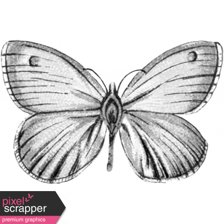 Butterfly Template 006