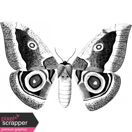 Butterfly Template 007