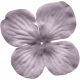 No Tricks, Just Treats-Solid Purple Flower