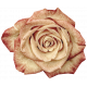 Vintage- November Blogtrain Rose