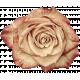 Vintage- November Blogtrain Rose