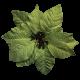 It's Christmas- Green Poinsettia