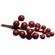 It's Christmas- Red Berry Branch