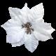 It's Christmas- White Poinsettia