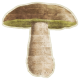 Enchanted- Mushroom 02 Sticker