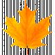 Fall Leaf 1