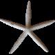 Blog Train Starfish
