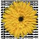 Khaki Scouts Yellow Flower