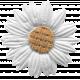 Twilight- Flower White Daisy
