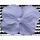 Lake District- Flower Blue