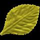 Lake District- Leaf Green