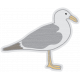 Coastal Sea Gull