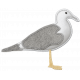 Coastal Sea Gull Felt