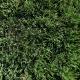 Real Textures 073- Grass