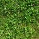 Real Textures 076- Grass