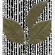 Leaf 016