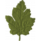 Leaf- Snowshoes