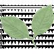 Sunshine & Lemons Leaf
