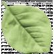Mexico Leaf- 002