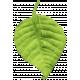Mexico Leaf- 003