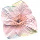 Garden Party Mini Kit - Colored Flower